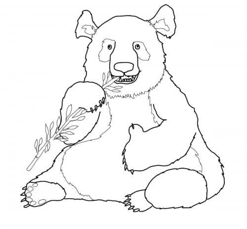 panda animale immagini
