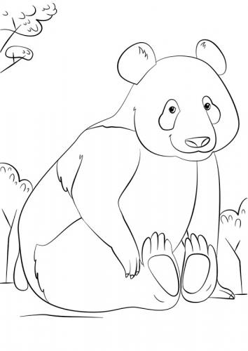panda disegno