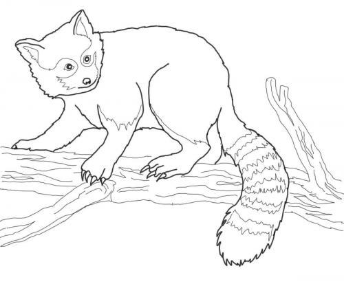 panda rosso disegno