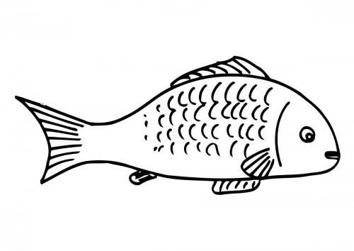 pesce del mare