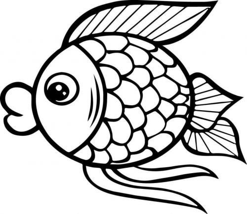 pesciolino simpatico che guarda a sinistra