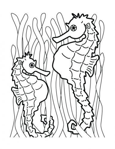 due cavallucci marini