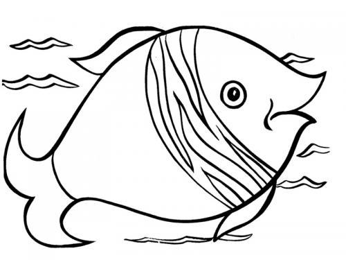 pesce con il muso appuntito