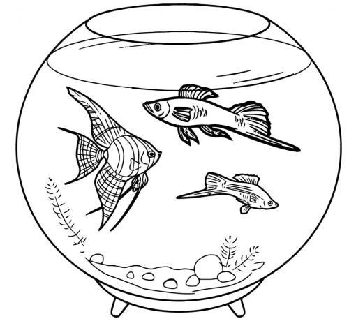 pesci tropicali nell'acquario