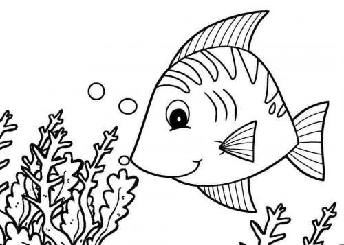 pesciolino che annusa le alghe