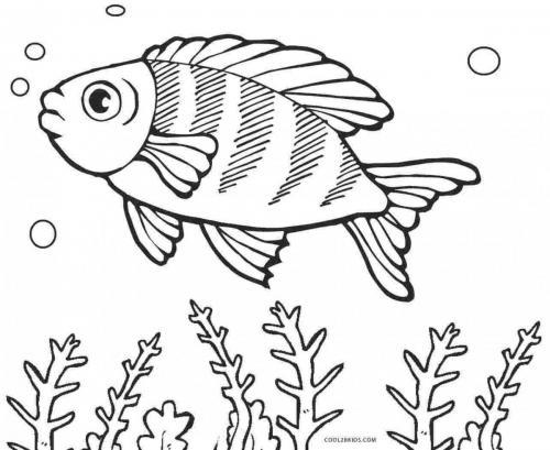 pesce che fa le bolle