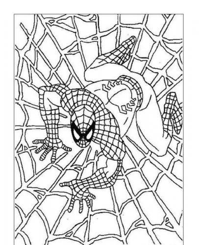ragnatele disegno