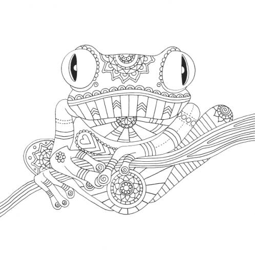 rana disegno da colorare
