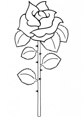 rosa con le spine