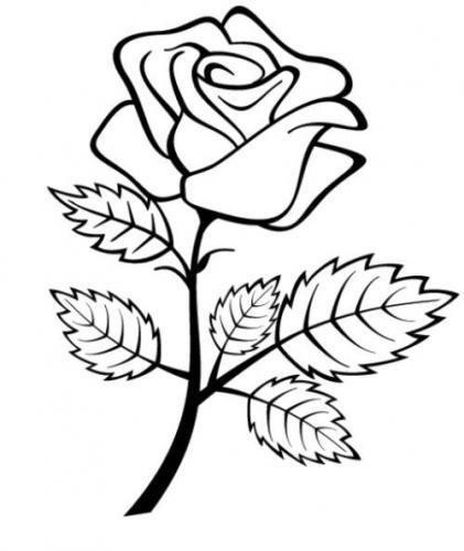 rose da colorare