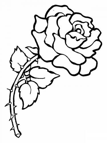 rosa con tante spine