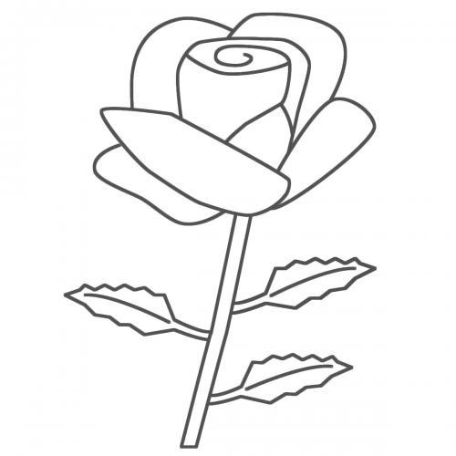 rose disegno a matita