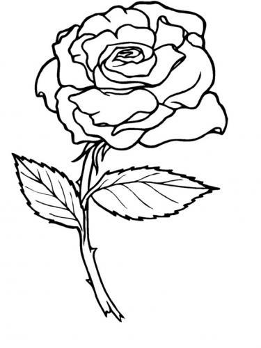 disegni di una rosa