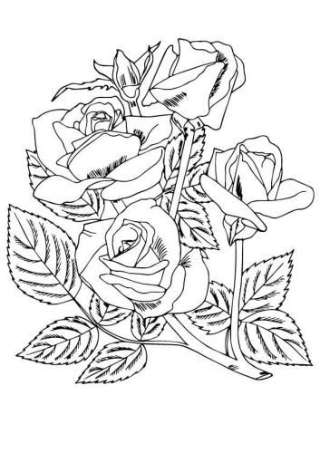 rose su un prato