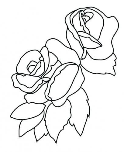 diegno di due rose