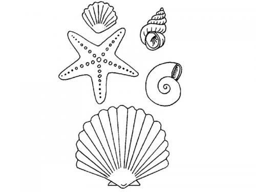 stella marina e conchiglie