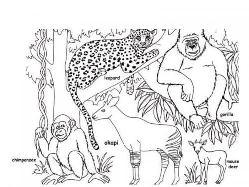 sagome animali