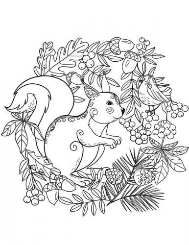 scoiattoli da colorare