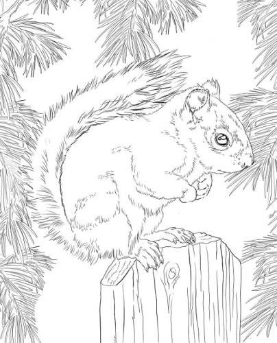scoiattoli disegni da colorare e stampare