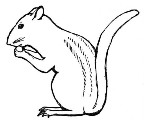 scoiattoli disegni da disegnare