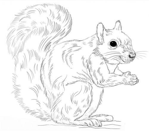 scoiattoli disegni da stampare