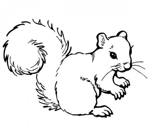 scoiattoli disegno da colorare
