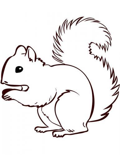 scoiattoli immagini da colorare