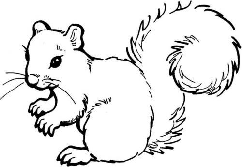 scoiattoli immagini gratis