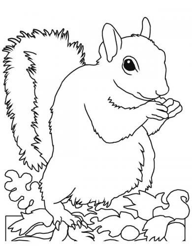 scoiattoli immagini