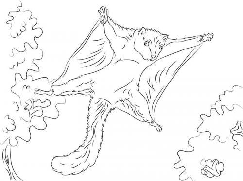 scoiattoli volanti immagini