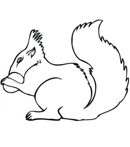 scoiattolo disegni da colorare