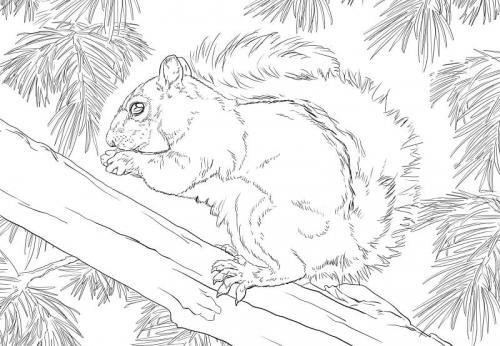 scoiattolo disegni da stampare