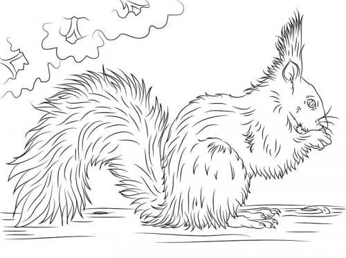 scoiattolo immagini da colorare
