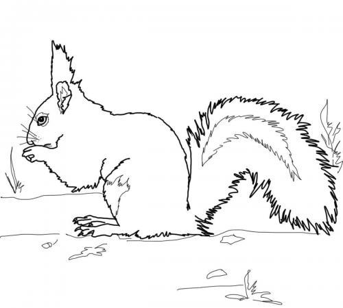 stampa e colora scoiattoli
