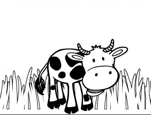 mucca in bianco e nero