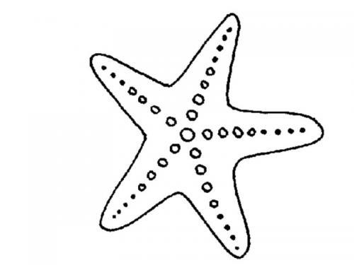 stella disegno