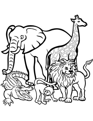 tanti animali da colorare