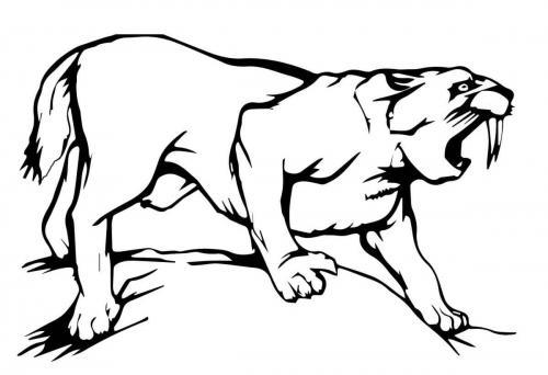 tigre dai denti a sciabola disegno