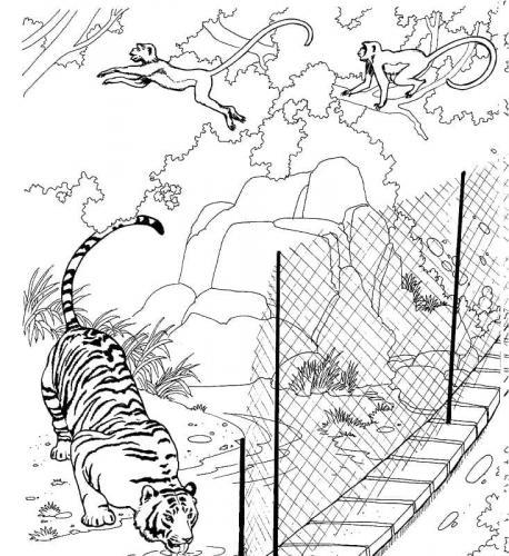 tigre disegni da colorare