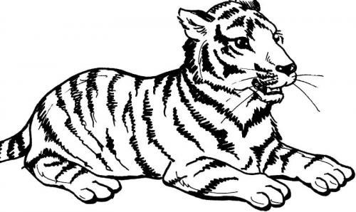 tigre disegni da colorare e stampare