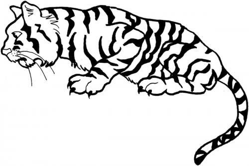 tigre disegni da stampare