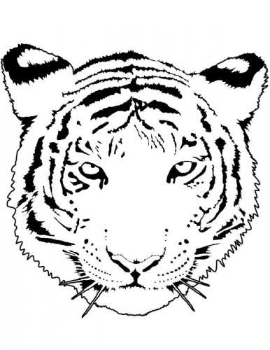 tigre disegno a matita