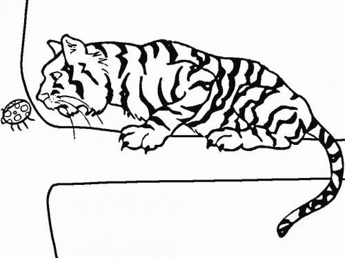 tigre disegno da colorare