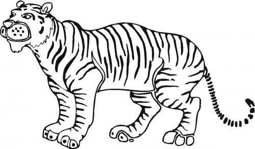 tigre immagini gratis