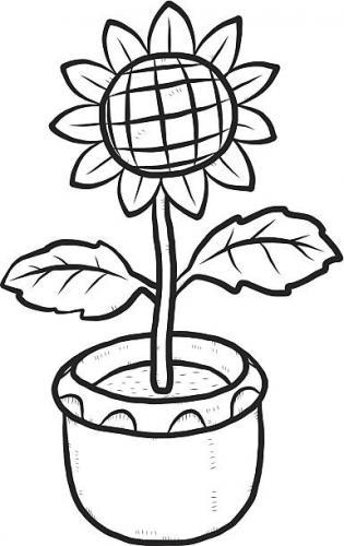 vaso con girasole